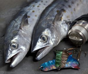 How to catch Spanish mackerel