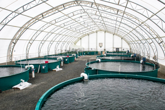 Surveillance of pharmaceuticals used in fish farming
